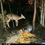 Nocturnal Wildlife photographed by Craven County Tree Farmer Joe Hughes